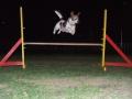 agility_20